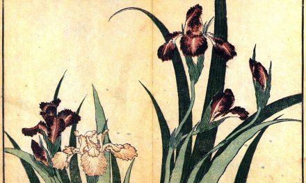Giappone: l'armonia diventa arte